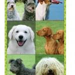 KutyákJegyzet